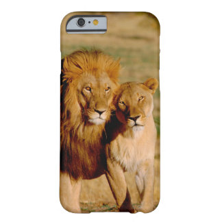Africa, Namibia, Okonjima. Lion & lioness Barely There iPhone 6 Case
