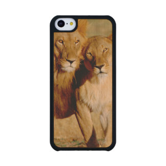 Africa, Namibia, Okonjima. Lion & lioness Carved® Maple iPhone 5C Slim Case