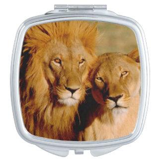 Africa, Namibia, Okonjima. Lion & lioness Compact Mirror