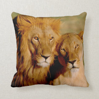 Africa, Namibia, Okonjima. Lion & lioness Cushion