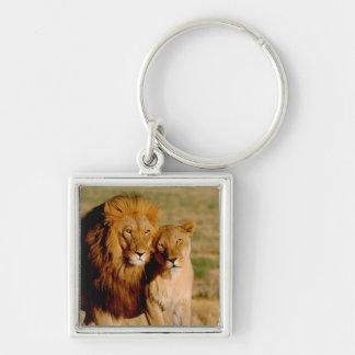 Africa, Namibia, Okonjima. Lion & lioness Key Ring