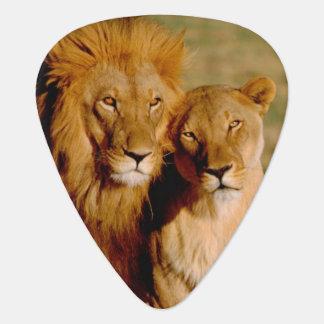 Africa, Namibia, Okonjima. Lion & lioness Plectrum