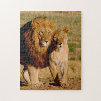Africa, Namibia, Okonjima. Lion & lioness Puzzle