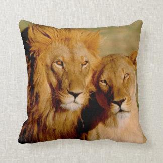 Africa, Namibia, Okonjima. Lion & lioness Throw Cushion