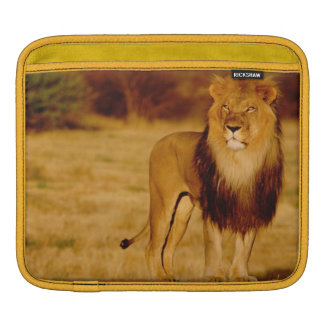 Africa, Namibia, Okonjima. Lone male lion iPad Sleeve