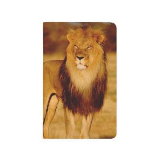 Africa, Namibia, Okonjima. Lone male lion Journal