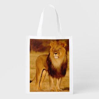 Africa, Namibia, Okonjima. Lone male lion Reusable Grocery Bag