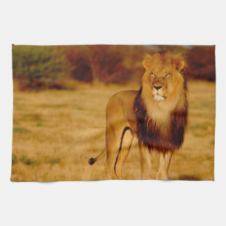 Africa, Namibia, Okonjima. Lone male lion Tea Towel