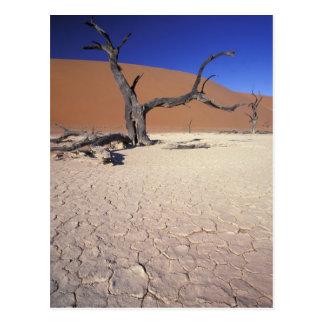 Africa, Namibia, Sossusvlei Region. Sand dunes Postcard