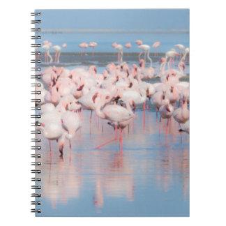 Africa, Namibia, Walvis Bay Notebooks