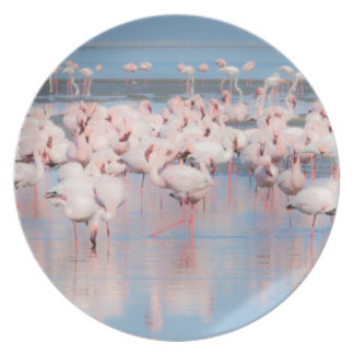 Africa, Namibia, Walvis Bay Plate