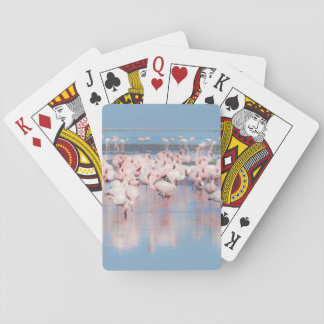 Africa, Namibia, Walvis Bay Playing Cards