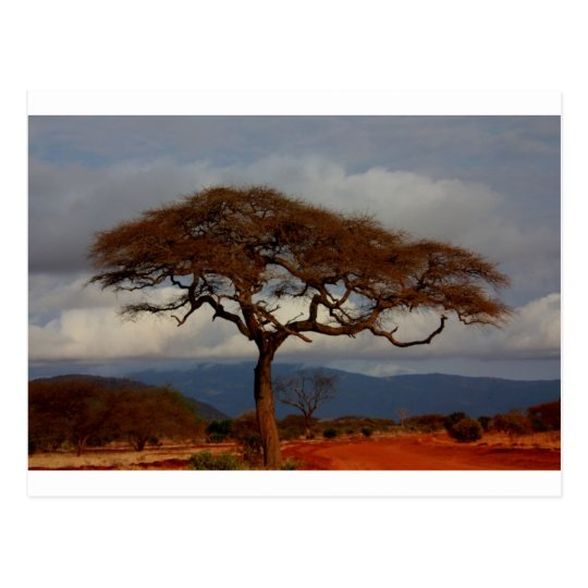 Africa Safari Nature Savanna Destiny Personalise Postcard