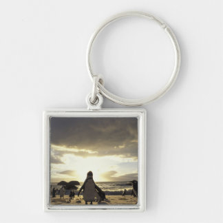Africa, South Africa Black-footed penguins Silver-Colored Square Key Ring