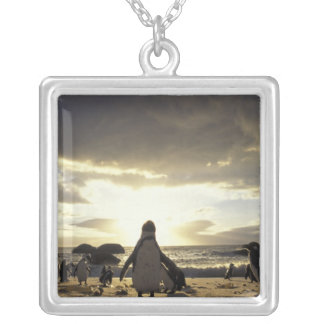 Africa, South Africa Black-footed penguins Silver Plated Necklace