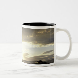 Africa, South Africa Black-footed penguins Two-Tone Coffee Mug