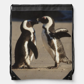 Africa, South Africa, Capetown area Jackass Drawstring Bag