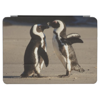 Africa, South Africa, Capetown area Jackass iPad Air Cover