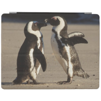 Africa, South Africa, Capetown area Jackass iPad Cover