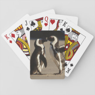 Africa, South Africa, Capetown area Jackass Playing Cards