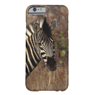 Africa, South Africa, Kruger NP Zebra portrait Barely There iPhone 6 Case