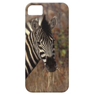 Africa, South Africa, Kruger NP Zebra portrait iPhone 5 Cases