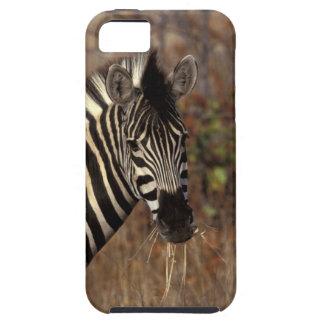 Africa, South Africa, Kruger NP Zebra portrait iPhone 5 Case