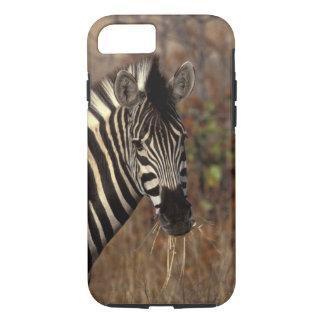 Africa, South Africa, Kruger NP Zebra portrait iPhone 7 Case