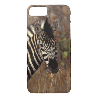 Africa, South Africa, Kruger NP Zebra portrait iPhone 8/7 Case