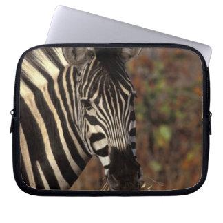 Africa, South Africa, Kruger NP Zebra portrait Computer Sleeves