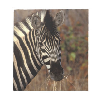 Africa, South Africa, Kruger NP Zebra portrait Notepad