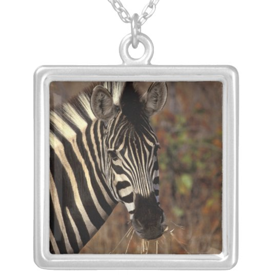 Africa, South Africa, Kruger NP Zebra portrait Silver Plated Necklace