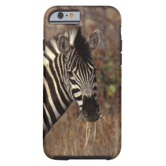 Africa, South Africa, Kruger NP Zebra portrait Tough iPhone 6 Case