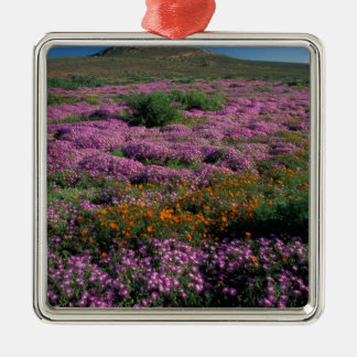 Africa, South Africa, Namaqualand, Orange and Christmas Ornament