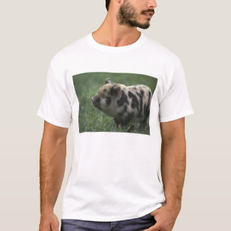 Africa, South Africa, near Gansbaii Domestic 2 T-Shirt