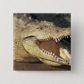 Africa, South Africa Nile crocodile 15 Cm Square Badge
