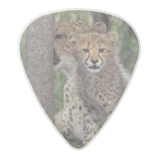 Africa, South Africa, Phinda Preserve. Cheetah Acetal Guitar Pick