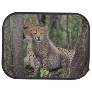 Africa, South Africa, Phinda Preserve. Cheetah Car Mat