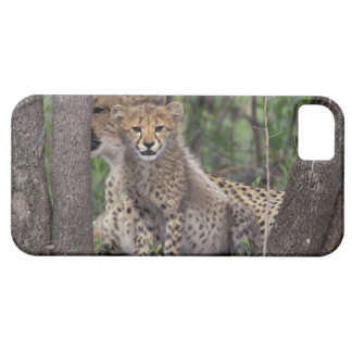 Africa, South Africa, Phinda Preserve. Cheetah Case For The iPhone 5