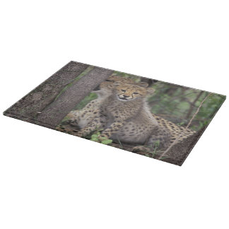 Africa, South Africa, Phinda Preserve. Cheetah Cutting Board