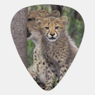 Africa, South Africa, Phinda Preserve. Cheetah Guitar Pick