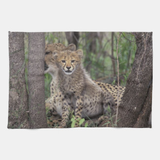 Africa, South Africa, Phinda Preserve. Cheetah Hand Towel