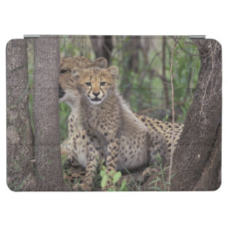 Africa, South Africa, Phinda Preserve. Cheetah iPad Air Cover