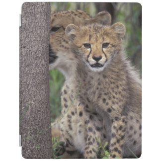 Africa, South Africa, Phinda Preserve. Cheetah iPad Cover