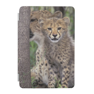 Africa, South Africa, Phinda Preserve. Cheetah iPad Mini Cover