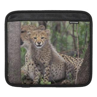 Africa, South Africa, Phinda Preserve. Cheetah iPad Sleeve