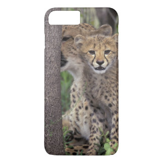 Africa, South Africa, Phinda Preserve. Cheetah iPhone 8 Plus/7 Plus Case