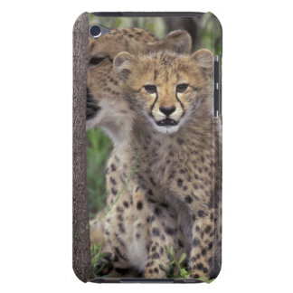 Africa, South Africa, Phinda Preserve. Cheetah iPod Case-Mate Cases