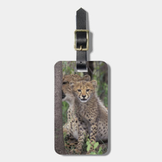 Africa, South Africa, Phinda Preserve. Cheetah Luggage Tag