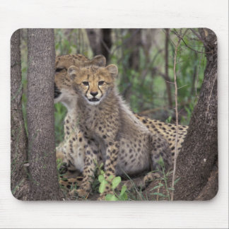 Africa, South Africa, Phinda Preserve. Cheetah Mouse Mat